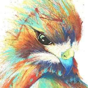 colourful hawk